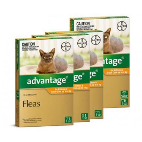 Advantage Kittens & Small Cats
